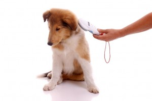 how-do-dog-microchips-work.jpg